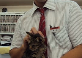 また猫ちゃんを拾いました