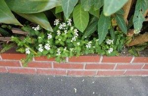 花壇も春です!